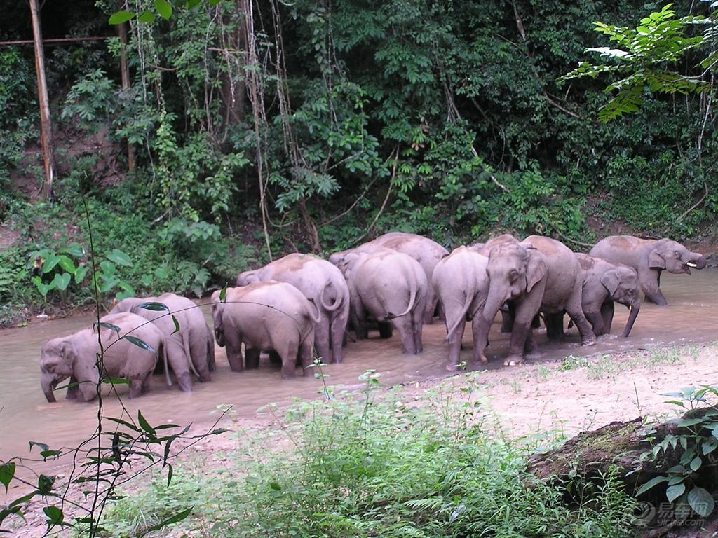 野象谷位于云南勐养自然保护区南