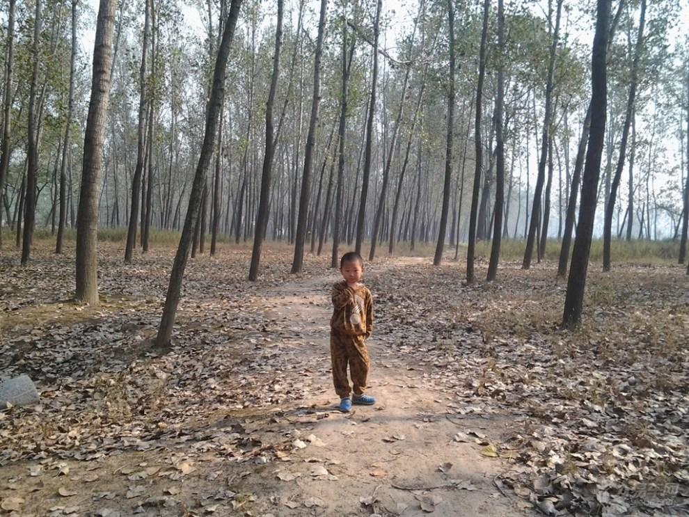 秋天的杨树林中枯草地