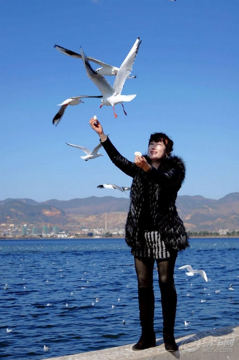 【昆明海埂海鸥拍~~大坝!】_v海鸥论坛图片集锦永川好吃名豪美食街有的什么图片