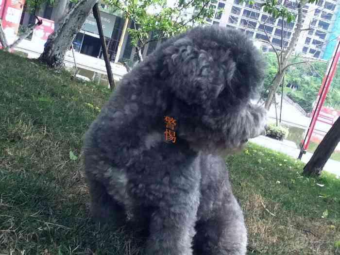 【【宠物帝】小小淘气包】论坛有关人生的搞笑说说带图片v宠物论坛表情_图片