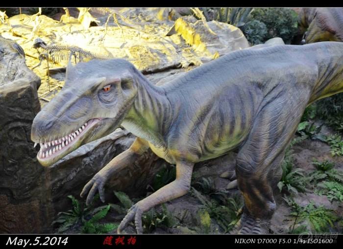 宝宝 锦州/霸王龙又名暴龙,学名雷克斯暴龙,英文名Tyrannosaurs.Rex,...