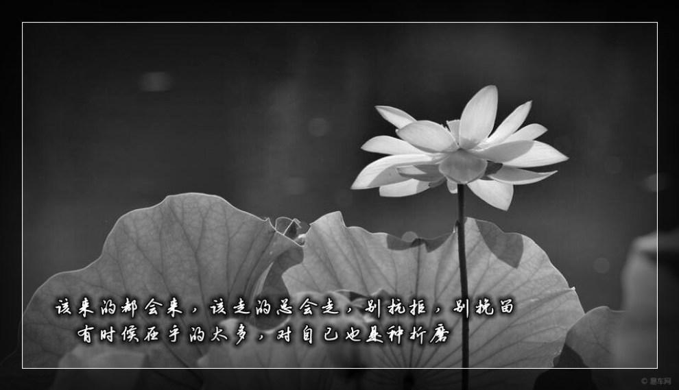 【用漫不经心的态度,过随遇而安的生活】_山东