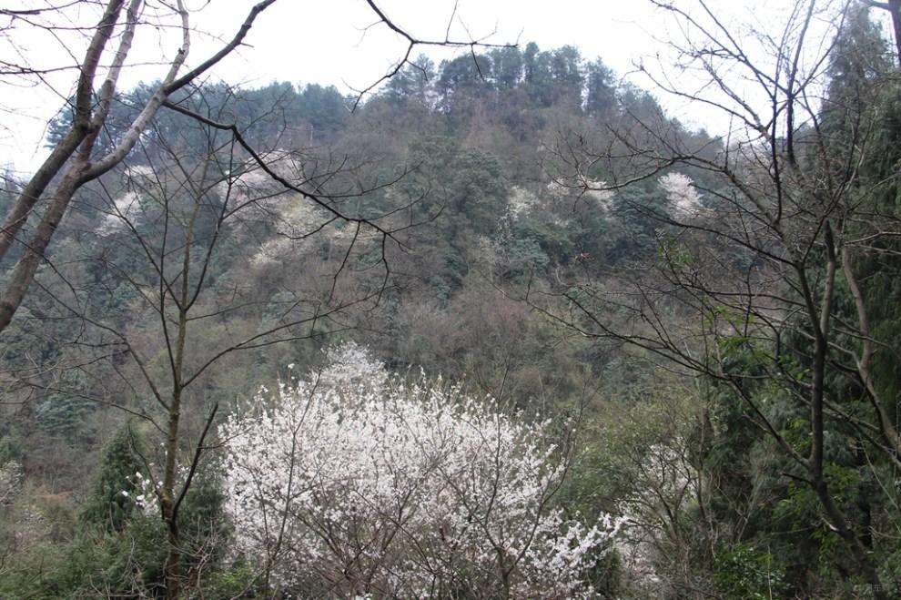 南充金城山森林公园