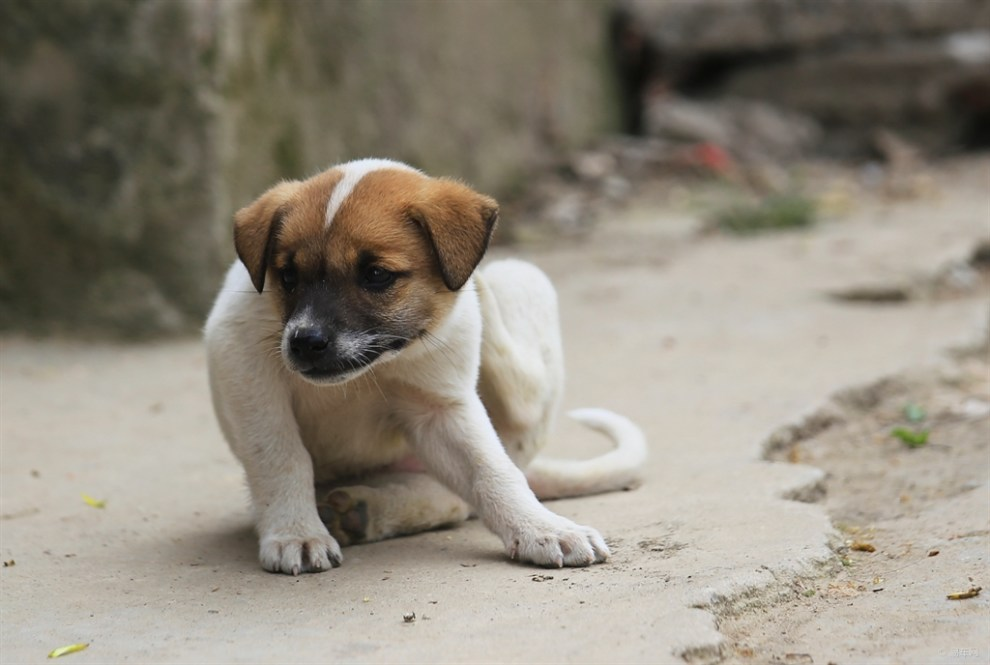 【再上一只小萌狗】_宠物当家论坛图片集锦