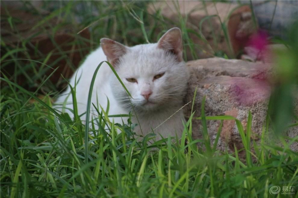 【睡觉的猫咪】_宠物当家论坛图片集锦