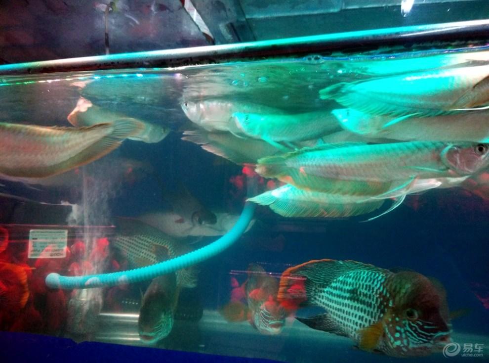 壁纸 动物 海底 海底世界 海洋馆 水族馆 鱼 鱼类 990_734