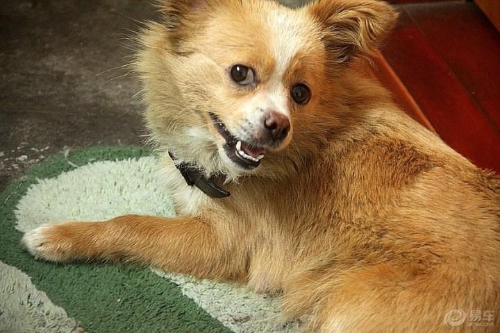 【表情宠物doge表情包图小】_论坛v表情汽车_论坛皮皮-易车图片