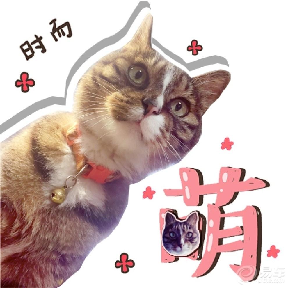 【【网红豹爷】表情帝豹爷凭表情burning小小搞笑图再度走红1图片