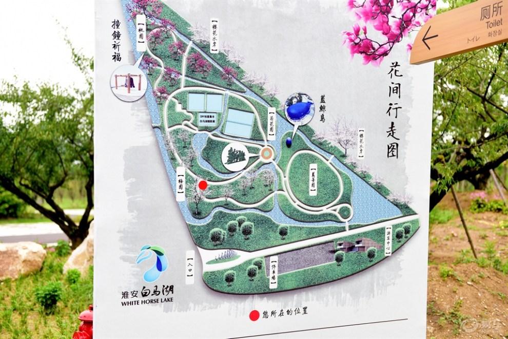 【精华帖争霸赛】野帝陪你去经历~游玩淮安白马湖森林公园