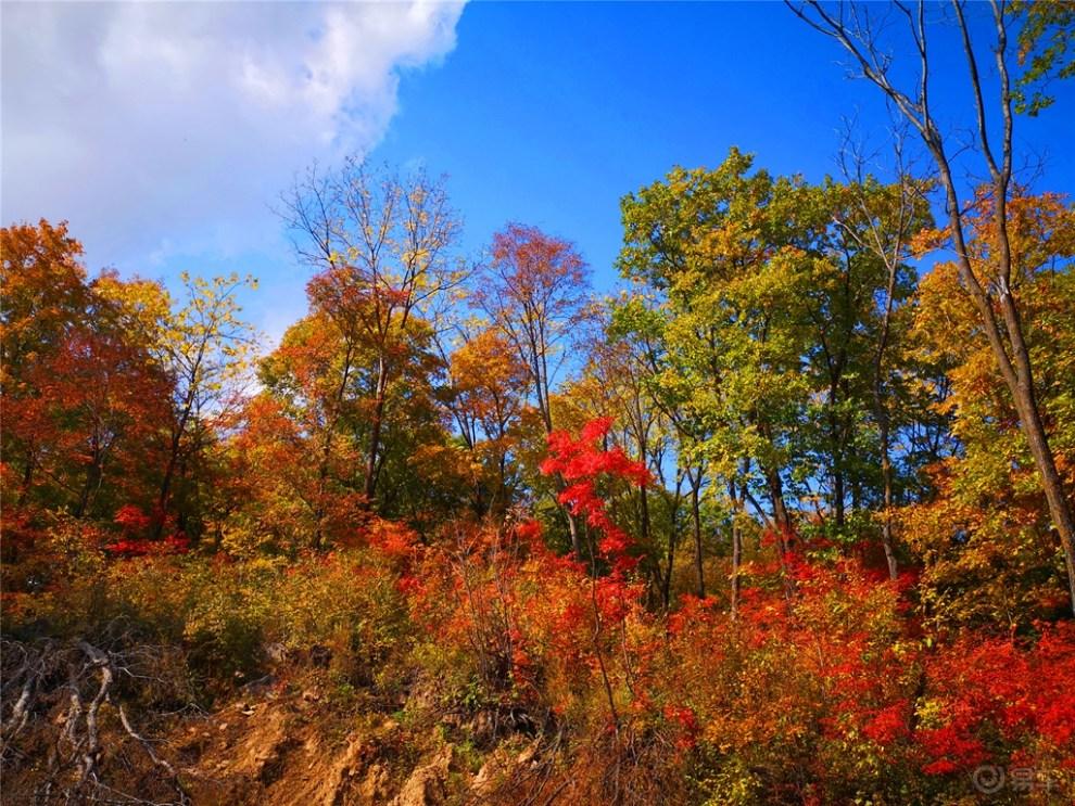 【吉林市长安车友会】75车友自驾乡野林间赏红叶图片