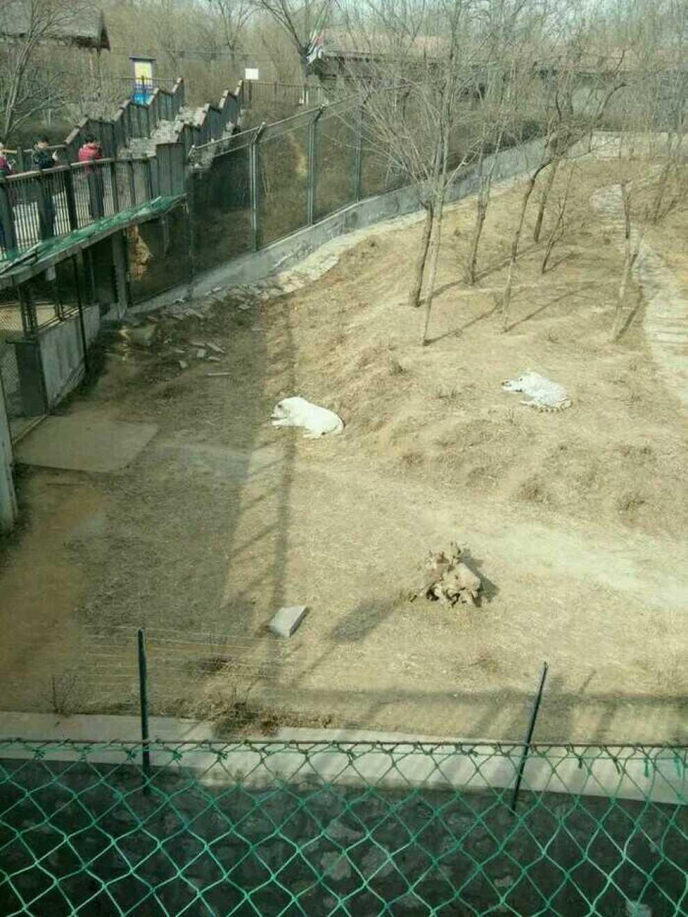 石家庄辛玛王国动物园