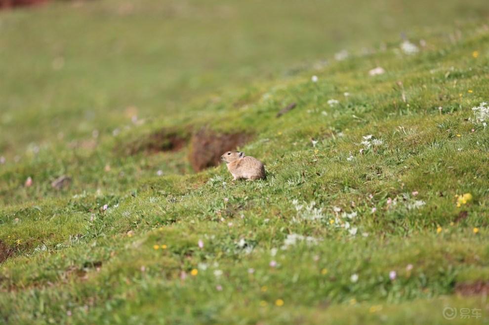 西行漫记——美丽的拉乌山可爱的兔鼠