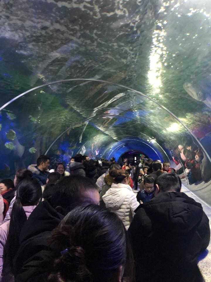 #乐驾新春#春节游老家的海洋馆