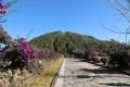 云南腾冲火山公园
