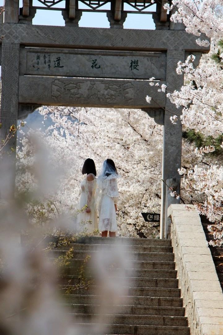 人间最美四月天,我与小凯看樱花!