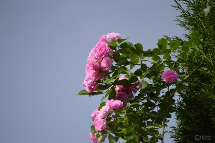 心有猛虎,细嗅蔷薇
