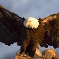黑鹰2009