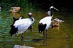 广州动物园采景