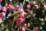 雀跃梅枝喜迎春来